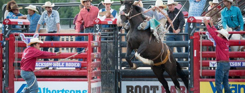 Bronc Riding at the Teton County Fair